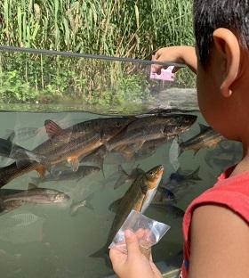 魚の餌やり体験