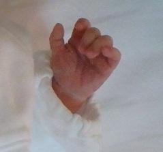 新生児の小さな手