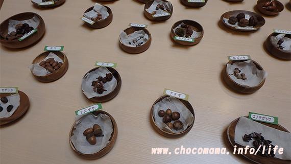 さかな公園の忍野村立「森の学習館」館内展示 どんぐり(山梨県)