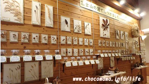 さかな公園の忍野村立「森の学習館」館内展示(山梨県)
