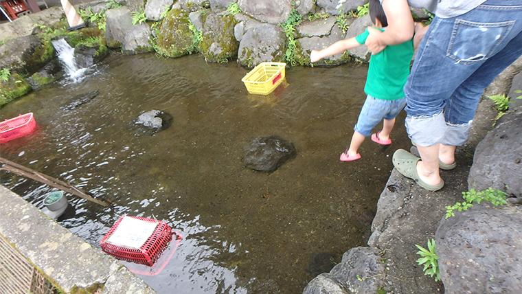 富士見釣り堀(山梨)のニジマスつかみ取り場