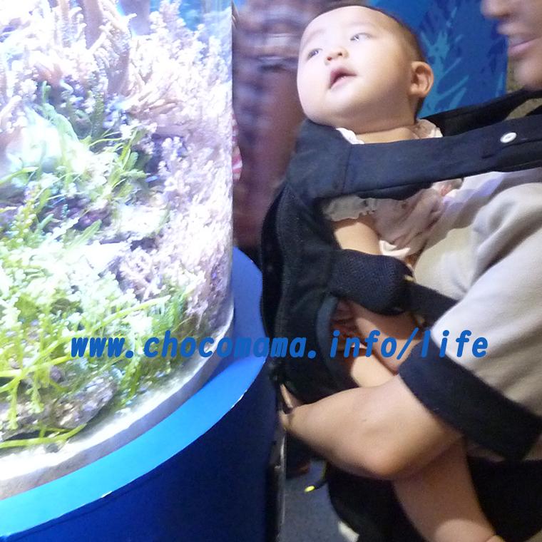 抱っこ紐で水族館へ