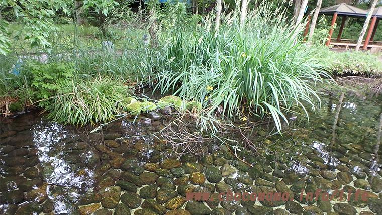 森の中の水族館。(山梨県の富士湧水の里水族館)入口の池
