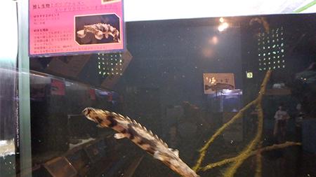 森の中の水族館。(山梨県の富士湧水の里水族館)企画展『飼育スタッフの好きすぎる生き物展(特別展)』館内展示