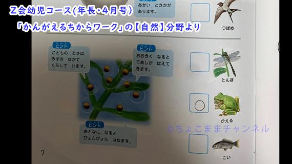 Z会幼児コースのかんがえるちからワーク内容「普通~難しい」(年長向け通信教育)