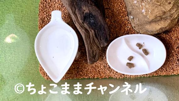 カナヘビの水飲み皿とエサ置き皿(カナヘビとニホントカゲの飼育を1年間やって分かった事)