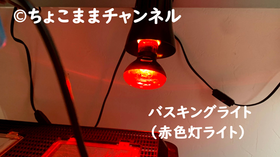 爬虫類用バスキングライト(カナヘビとニホントカゲの飼育を1年間やって分かった事)